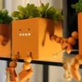 【花処 蔵】魚津市にある日本文化を感じる花屋に行ってきた