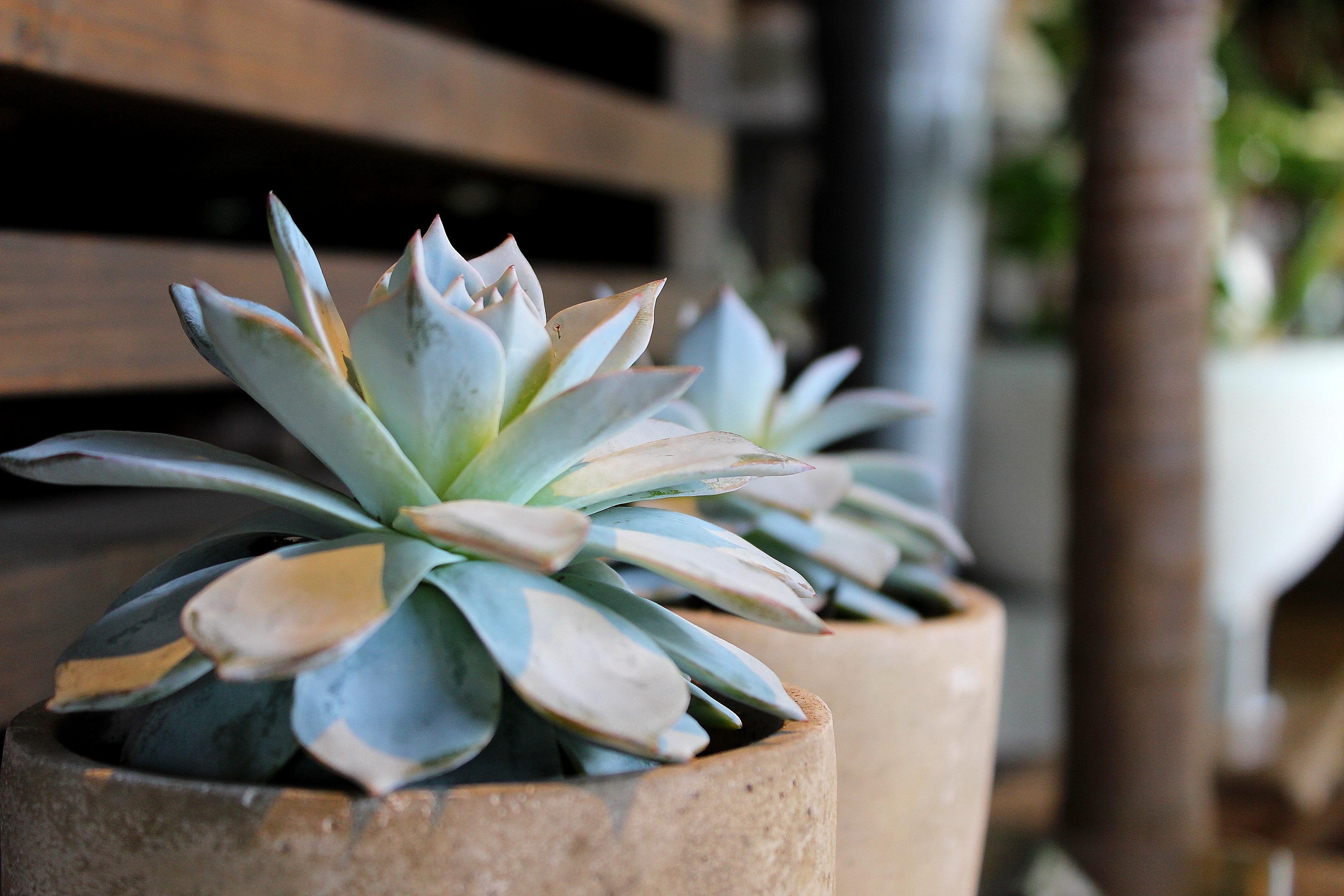 【COUP クー】本来の美しさを引出しプロフェッショナルな花屋