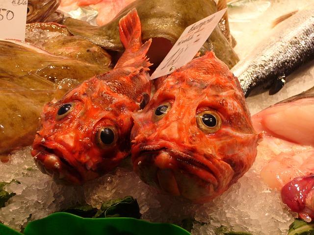 fish-4783_640