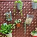 【Green&Soil グリーン&ソイル】野菜もあるオシャレな花屋さん
