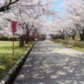 【宮野運動公園】ももクロもやってくる!? 桜まつりに行ってきた
