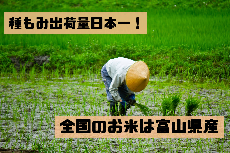 種もみ出荷量日本一!全国のお米はほとんど富山県産