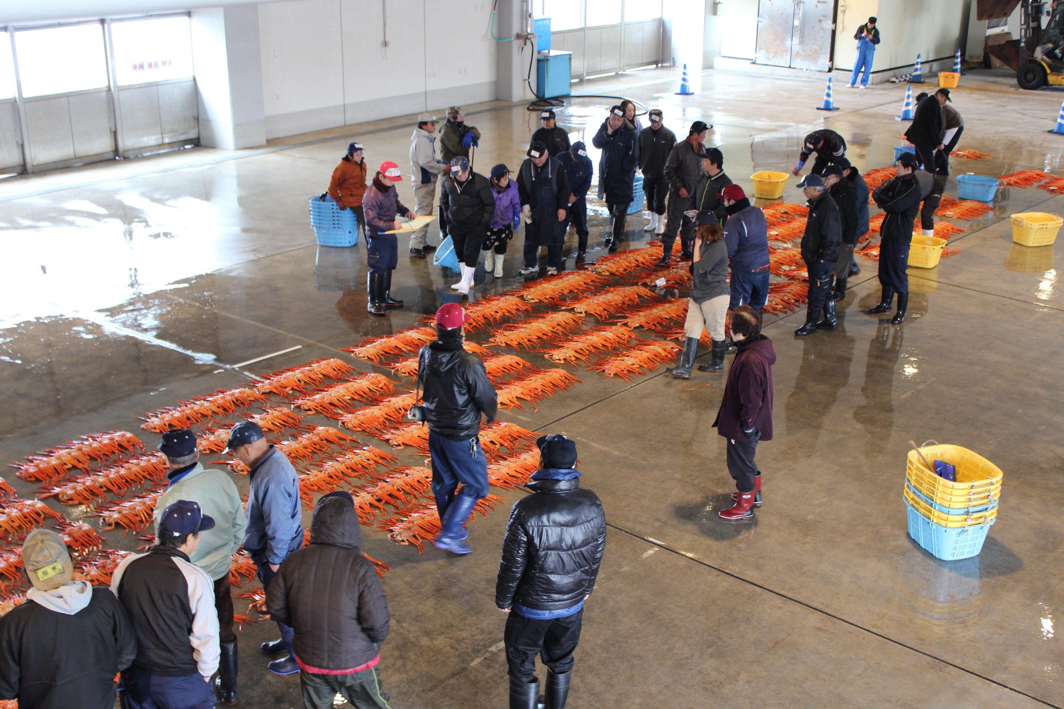 【新湊漁港の昼セリ見学】ベニズワイガニをそのまま食べることも