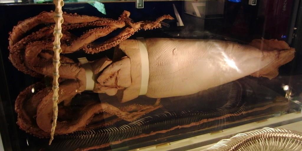 Giant_Squid_Specimen