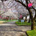 【魚津総合公園の花見】遊園地と水族館にある桜の名所に行ってきた