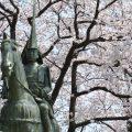 【高岡桜まつり】日本さくらの名所百選になった歴史あるスポット