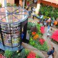 【チューリップ四季彩館】世界で唯一ずっと咲いている花の博物館