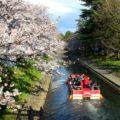 【松川公園の桜】観光にもおすすめの定番桜スポットに行ってきた