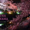 【富山 桜の名所2021】おすすめお花見スポットをまとめてみた