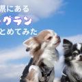 【富山のドッグラン】思いっきり遊べる10ヶ所まとめてみた