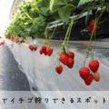 【富山でイチゴ狩り2021】いちごが食べられるスポット11選まとめ