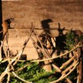 【ナイトズー2020】夏の夜に動物園ファミリーパークへ行ってきた