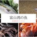 【富山の魚】春夏秋冬でマジでおいしい海の幸をご紹介!天然の生け簀