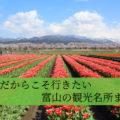 【富山の春2021】春だからこそ見られる!特別な観光地まとめ
