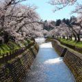 【常西用水プロムナード】遊歩道に沿う1kmの桜並木を見に行ってきた