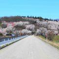 【桜ヶ池の桜】水面や山の斜面に広がる桜で覆われた公園を見てきた